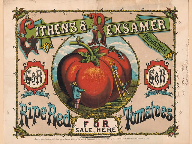 成熟的红番茄