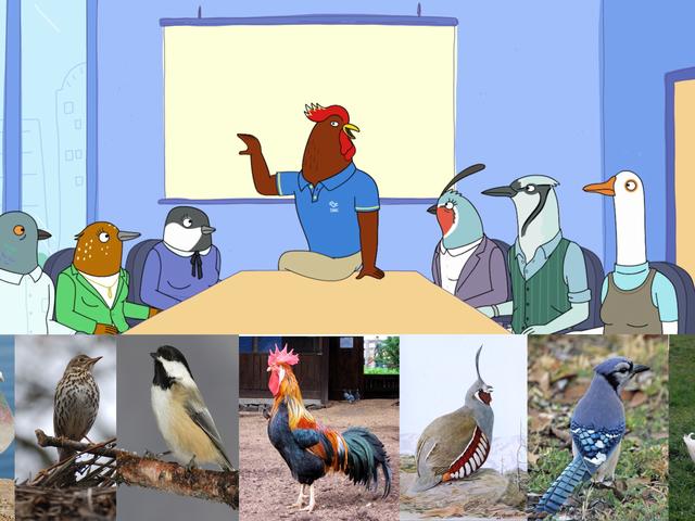 An Avian Aficionado Watched Tuca & Bertie, Then Tried to Identify All the Birds