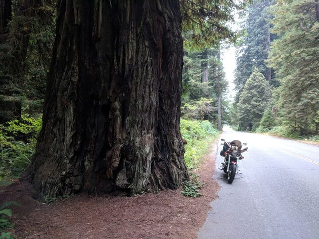 Motorcycle Road Trip, Day 10: Giant Trees and the road back home