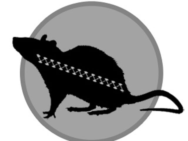 Toronto's Latest Hipster Trend: Sewing Up Dead Rats