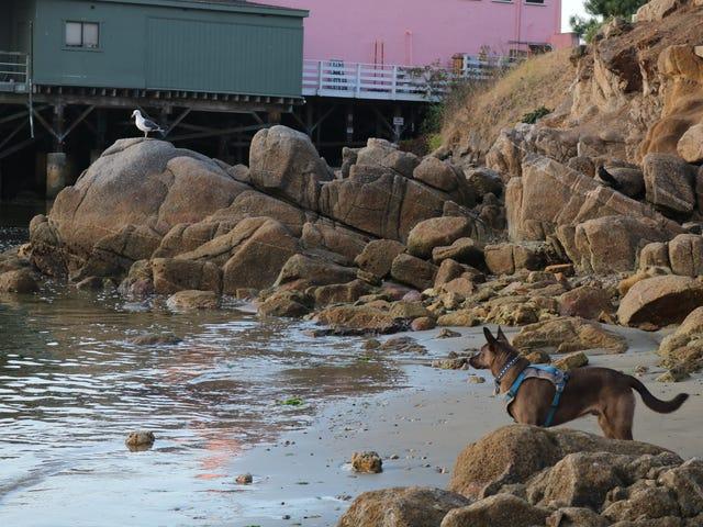 Bonne journée à Monterey