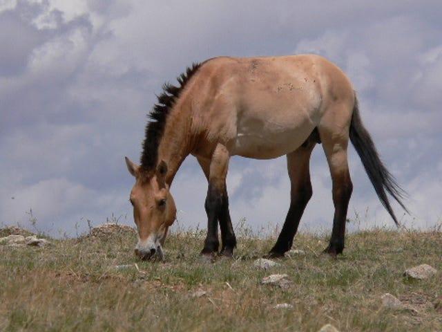 """No hay nada como un caballo realmente """"salvaje"""" <em></em><em></em>"""