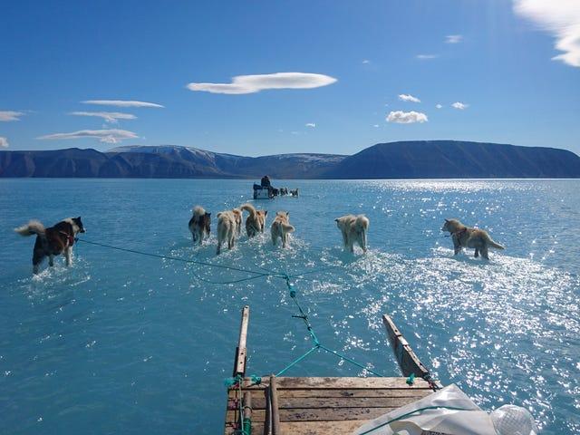 La foto del año: un grupo de perros de trineo se Arrayastra por el hielo derretido de Groenlandia