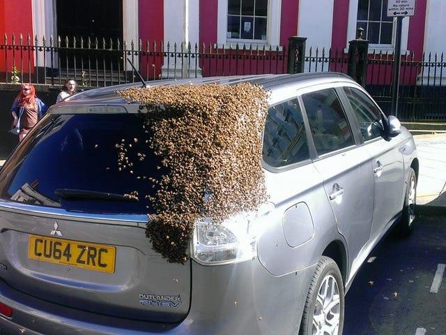 20.000 abejaer udleveres i løbet af 24 år, og der er ca.