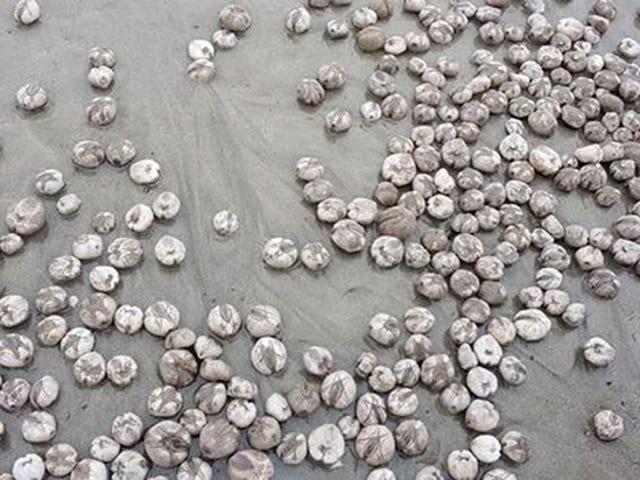Qué son en realidad estas extrañas esferas que han aparecido a cientos en una playa británica