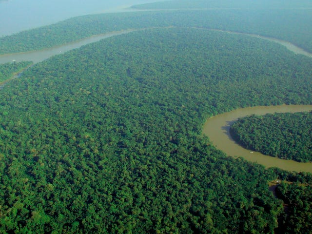 Earth's Tropical Forests Sprung a Major CO2 Leak During Last Year's El Niño