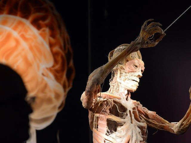 Các nhà khoa học thực hiện đột phá hướng tới việc lập bản đồ tất cả các tế bào trong cơ thể con người