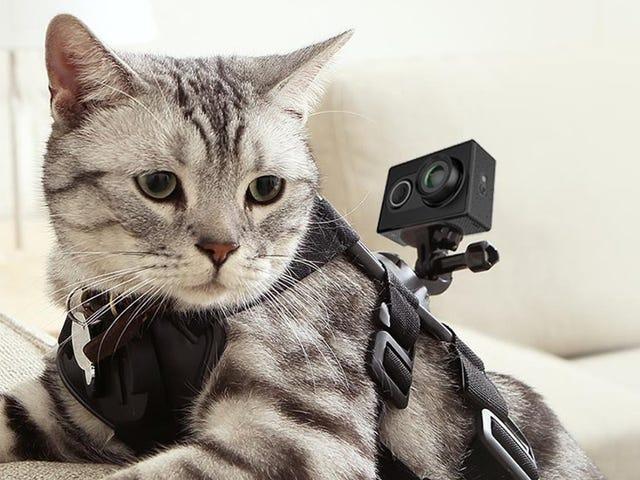 Meidän lukijoiden suosikki Budget Action Cam on vain 50 dollaria juuri nyt