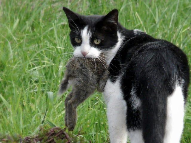 Дикие кошки - экологическая катастрофа
