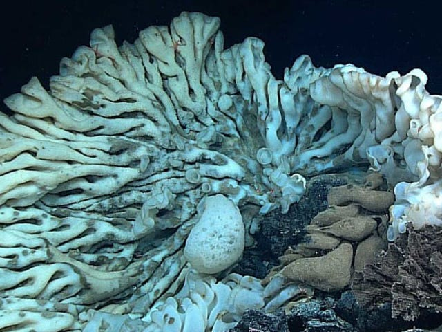 Look at the World's Biggest Sponge, Which Is Over 11 Feet Long