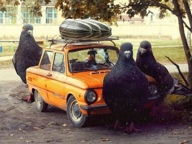 Selamat Halloween, Jangan Basuh Kereta Anda