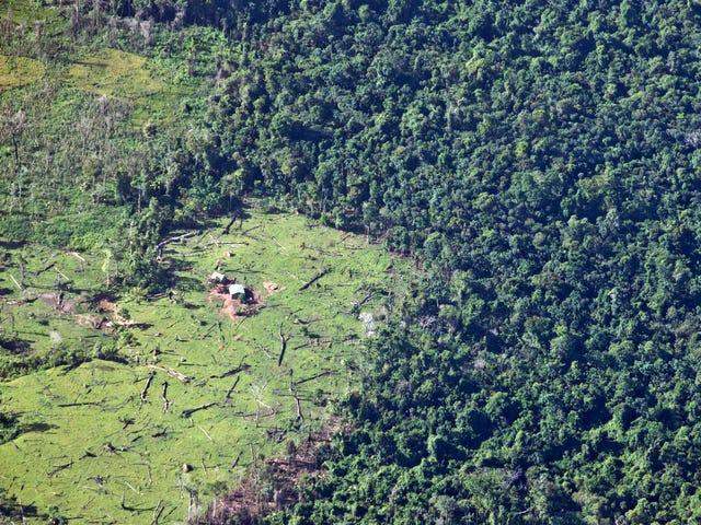 热带森林现在有一个严重的碳足迹问题