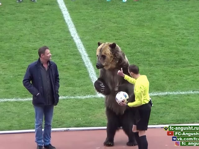 Enormous, Real-Life Bear Oversees Kickoff Of Russian Soccer Match