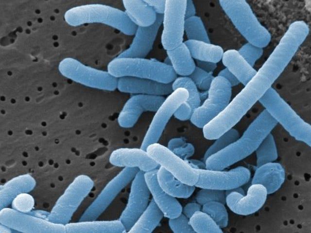 Kaji Peta Ratusan Bakteria yang Hidup di Faraj Manusia