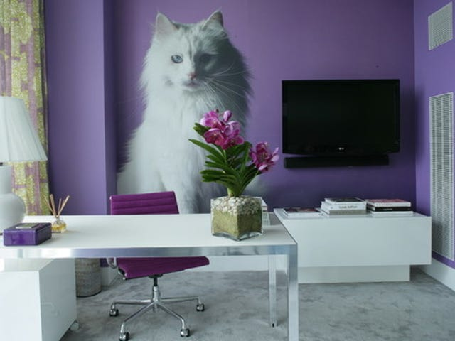 Would you elect to have purple walls?