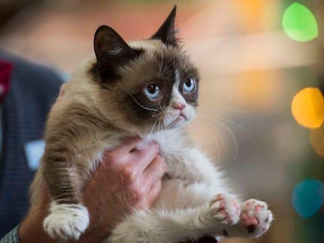 R.I.P. Grumpy Cat, a movie star, meme staple, and very good kitty