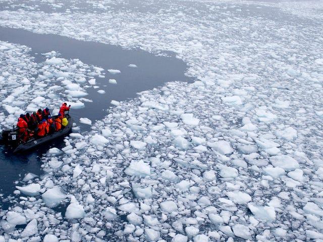 El hielo marino antártico se estrelló este año y los científicos no saben por qué