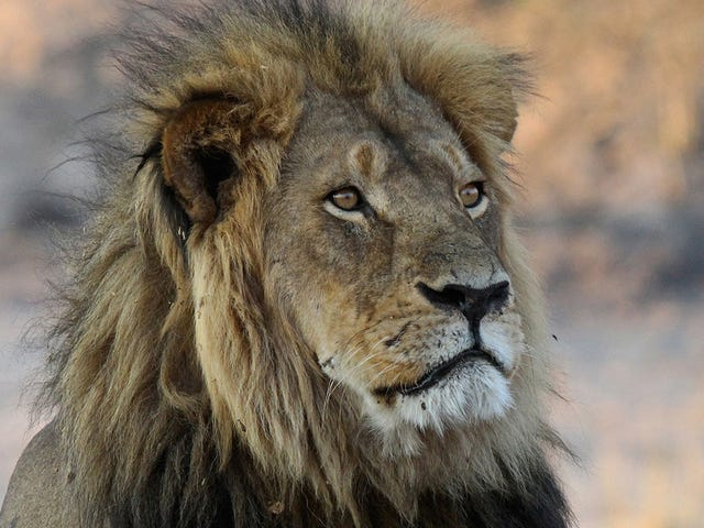 Trump's 'Wildlife Conservation Council' Is a Nightmare of Trophy Hunters and Gun Industry Executives