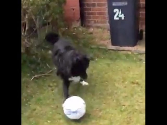 The Sports Highlight Of The Day Is This Scottish Dog's Soccer Mastery