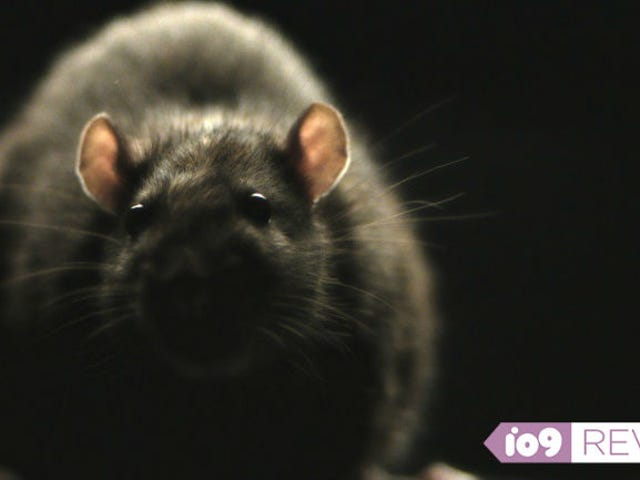 Movie Review: Morgan Spurlock's <i>Rats</i> Is One of the Grossest Films We've Ever Seen