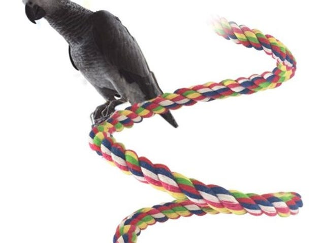 Petsvv Rope Bungee Bird Toy from $9.99