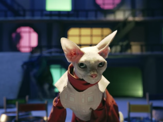 Regarder ces chats rappeler l&#39;expanse <i>The Expanse</i> saison 1, ou mieux encore, juste regarder <i>The Expanse</i>
