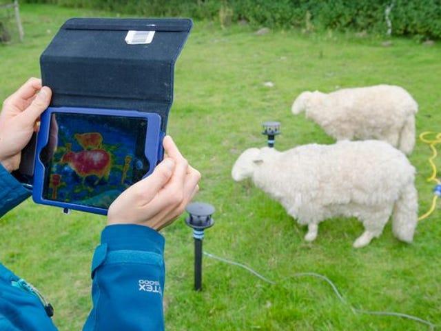 Electric sheep probe dream of a better lamb chop