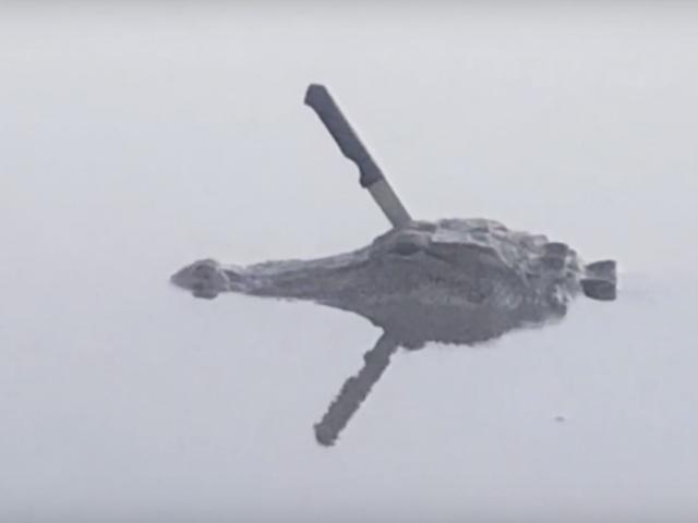 वे टेक्सास में एक झील में तैरते हुए एक चाकू के साथ एक काइमैन को ढूंढते हैं