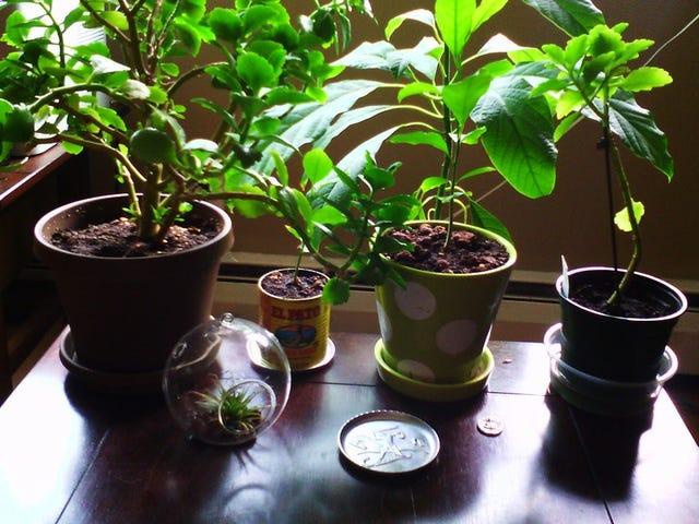 En ny undersøgelse afslutter myten: potteplanter, du har hjemme, renser ikke luften