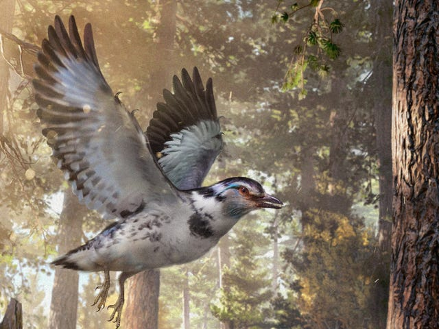 Check Out This Incredible Extinct Bird From the Cretaceous Period