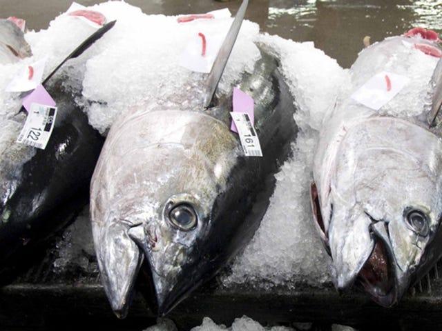 파리 기후 협정, 상업용 어선 구제 가능