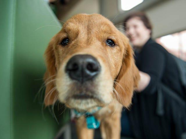 El tamaño de tu perro puede determinar su inteligencia, según la ciencia
