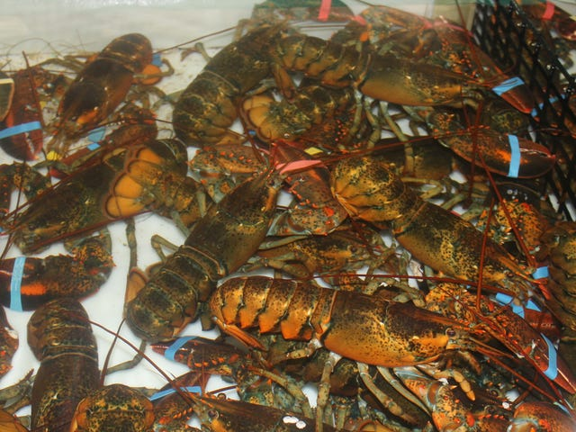 Switzerland Outlaws Boiling Lobsters Alive