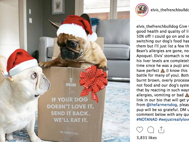 Pet Influencers tar over fordi menneskelige influencers holde Messing It Up