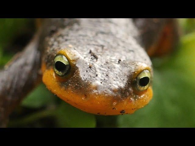 Video Mengenai Newt Sex Shows Just How Sex Human Boring Really Is