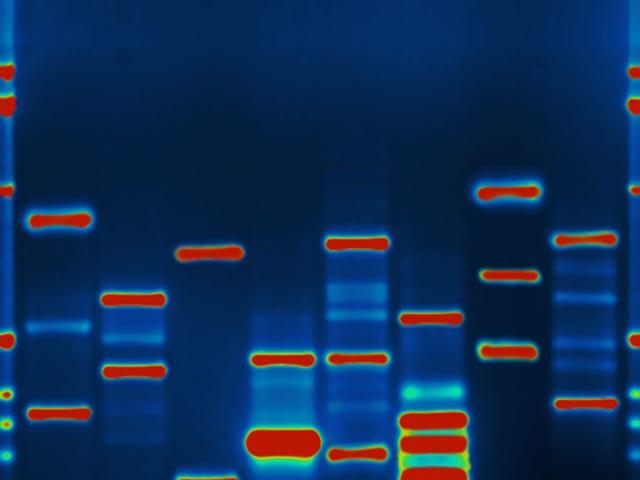 Шифрувальна технологія може захистити конфіденційність вашої ДНК