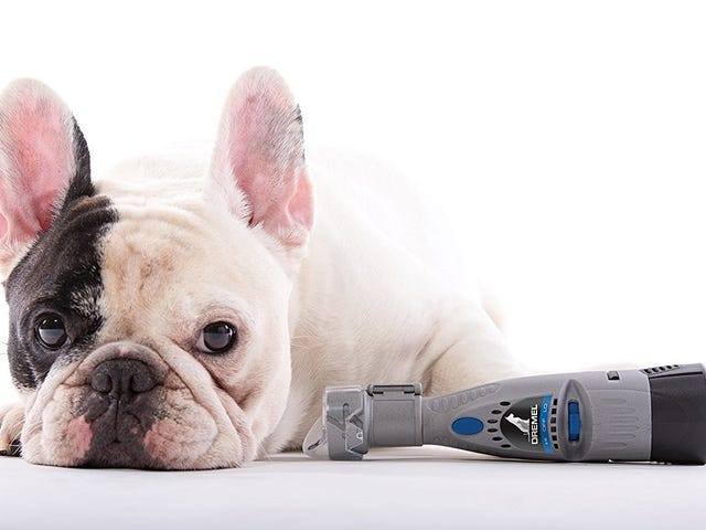 Trim Your Pet's Nails With With $31 Cordless Dremel
