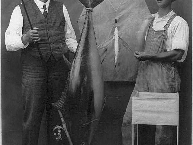 Capt. Farnsworth's Kite Tuna Catcher