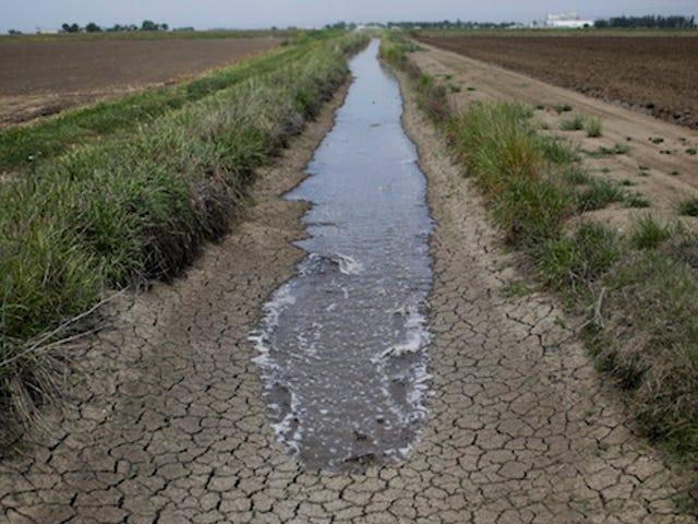 İşte Kaliforniya'nın Bugün Geçmesi Gereken Su Kısıtlamaları