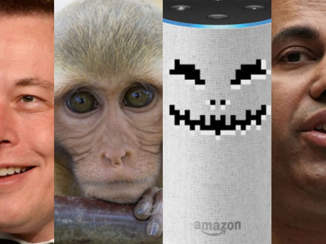 Elon Musk's Monkey Tests, Dating Site Hell, and Alexa Nightmares: The Best Gizmodo Stories of the Week