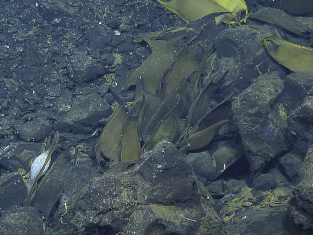 We Just Found Out that Deep Sea Vents Are Nurseries