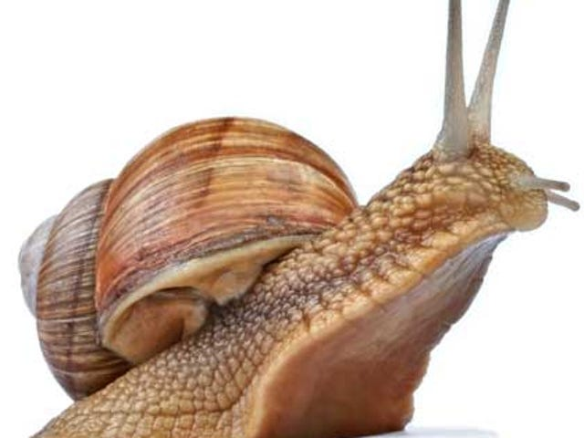 TAY Time Chat: All Hail Our New Snail Overlords