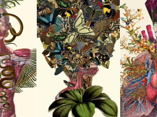 I Want These Bizarre Prints of Brains and Butterflies On My Walls
