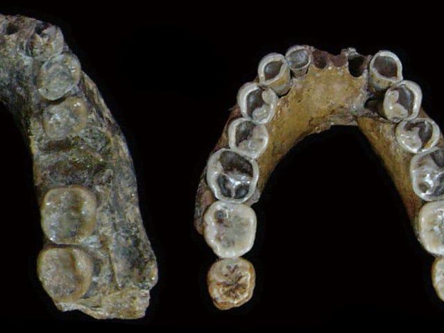 สายพันธุ์มนุษย์สูญพันธุ์อาจไม่วิวัฒนาการในเอเชียหลังจากทั้งหมดข้อเสนอแนะการวิจัยใหม่
