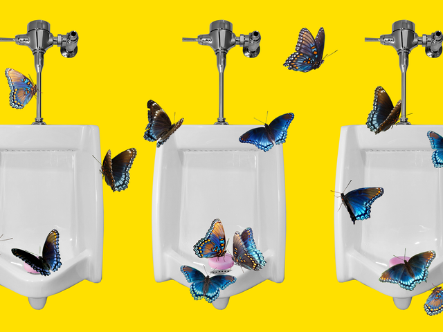 Meet the Animals That Go Wild for Your Pee
