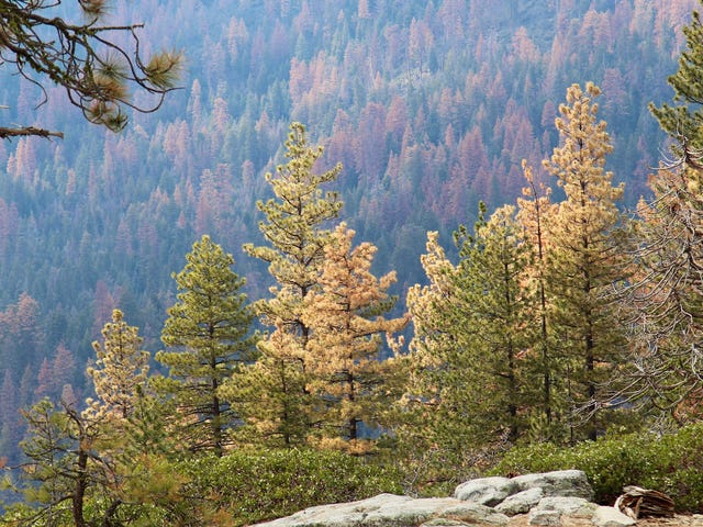 記録的な雨の年で、カリフォルニアはまだ2700万本の木を失いました