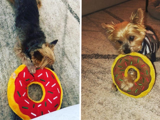 This $5 Donut Dog Toy Is One of the Only Toys To Survive My Super Chewer