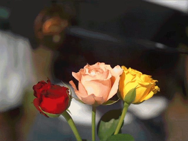 A Katana Slicing Roses in Slo-Mo Is a Perfect Metaphor For Your Last Few Valentine's Days