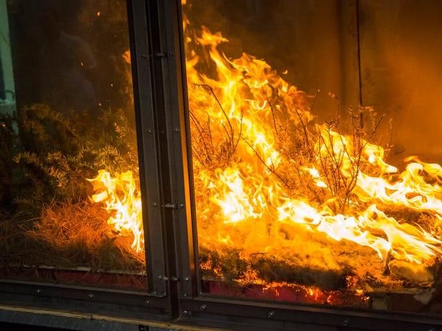 Les scientifiques qui jouent avec Wildfire