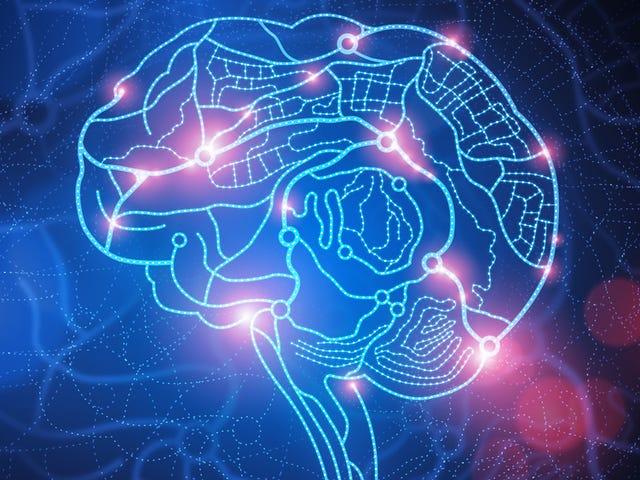 Rat Brains Are Organized Like The Internet